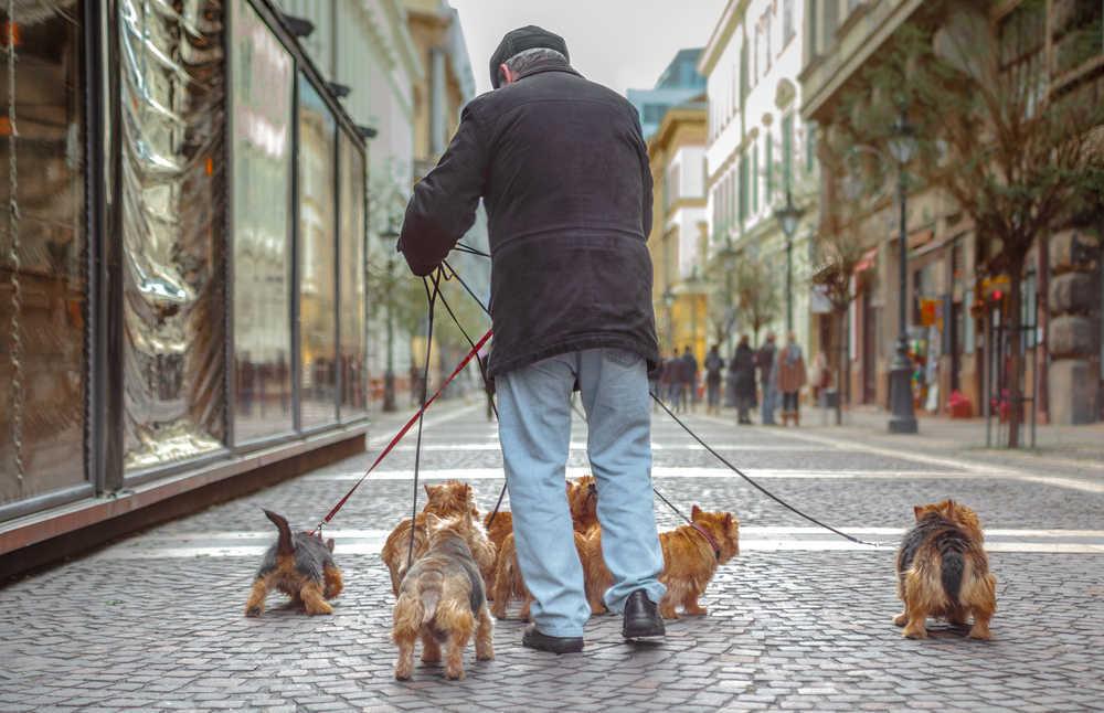 Así puedes viajar a Londres con tu mascota